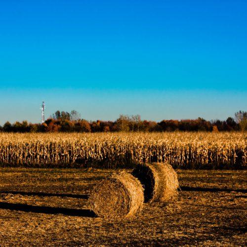 fields-2908311_1920